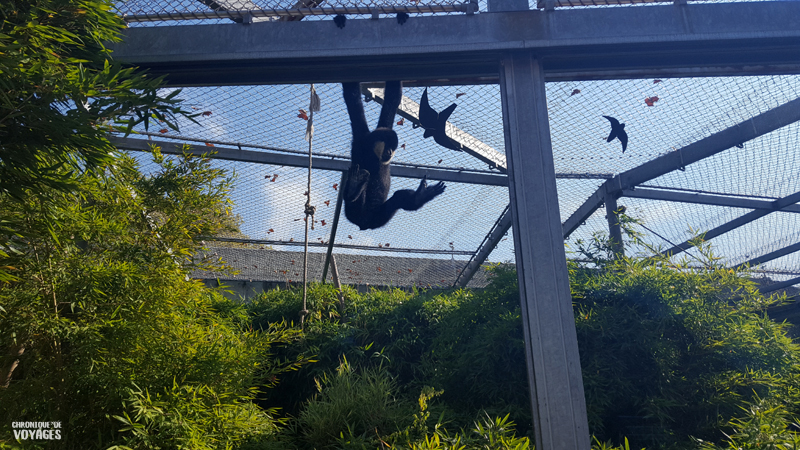 Zoo du parc de la tête d'or à Lyon